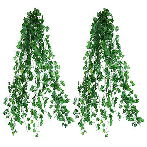 Quazilli Plantas