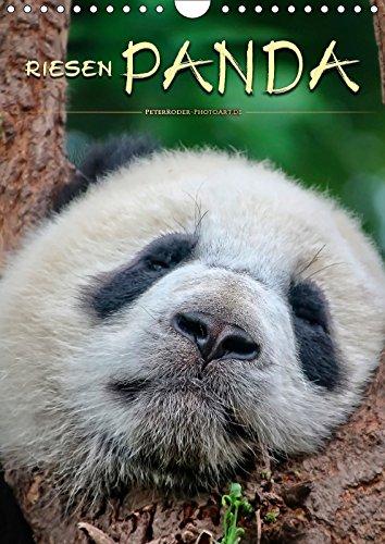 Riesenpanda (Wandkalender 2018 DIN A4 hoch): Eindrucksvolle Bilder eines wunderschönen Tieres. (Monatskalender, 14 Seiten ) (CALVENDO Tiere) [Kalender] [Jun 01, 2017] Roder, Peter