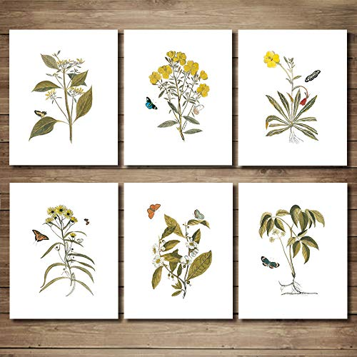 """JIMHOMY Butterfly Botanical Plant Wall Art Prints - Set of 6 Wall Decor Pictures Minimalist Wall Art Photo Prints Kitchen Bathroom Living Room Bedroom Wall Décor Poster Set UNFRAMED 8""""x10"""""""