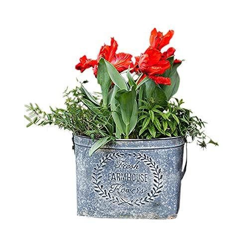 PLHMS Macetas de Cactus de Metal, macetas de Cubo para Colgar en la Pared Vintage, Maceta de Hierro, contenedor de Plantas suculentas de jardín con Asas, decoración de Bodas para el hogar