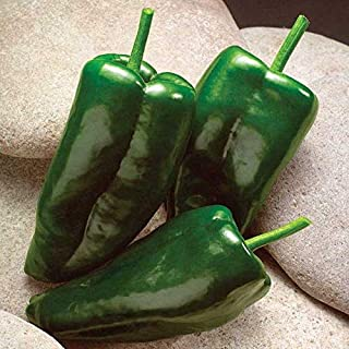 Best pepper caballero hybrid Reviews
