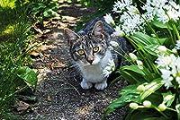DMFNGJSD 数字油絵 フレームレス 、数字キット塗り絵 手塗り DIY絵-猫の動物-デジタル油絵 40x50 cm