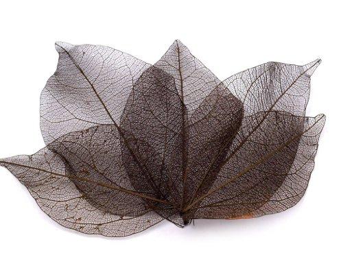 BUSDUGA 90 echte dekorative Blätter ca. 3 x 6cm - 6 Farben zur Wahl (6 braun)