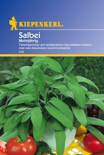 Salbei, 'mehrjährig'