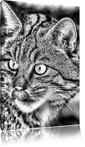 Pixxprint schöne Manul in Schneelandschaft / 60x40cm Leinwandbild bespannt auf Holzrahmen/Wandbild Kunstdruck Dekoration