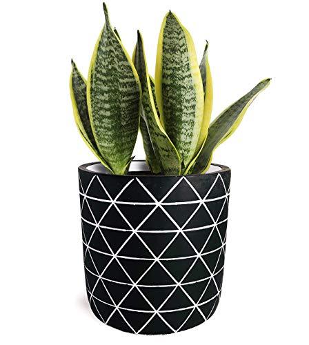Gepege Cement Succulent Planter 6 Inch Flower Pot, Concrete Modern Planter