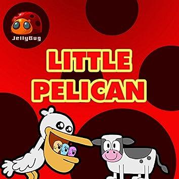 Little Pelican