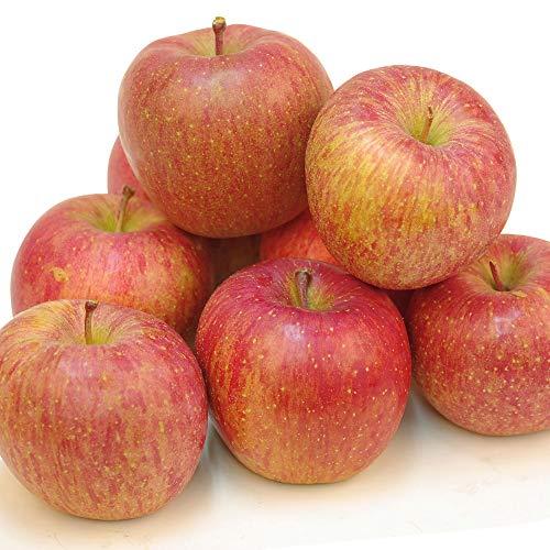 国華園 食品 りんご 青森産 傷有美味サンふじ 10kg 1箱