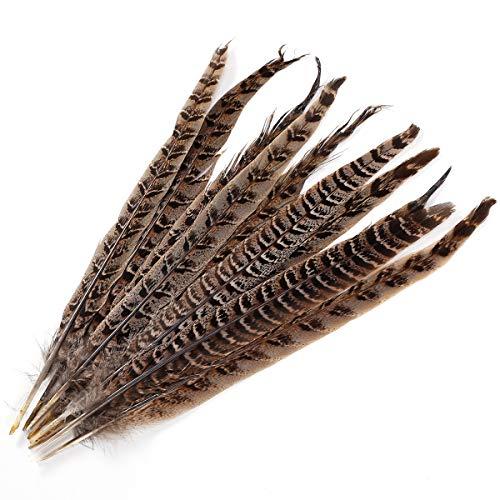 Anladia 10 STK Fasanenfedern 25-30cm Fasan Feder Natur Echte Vogelfeder Schmuckfedern Hutfeder Hutschmuck