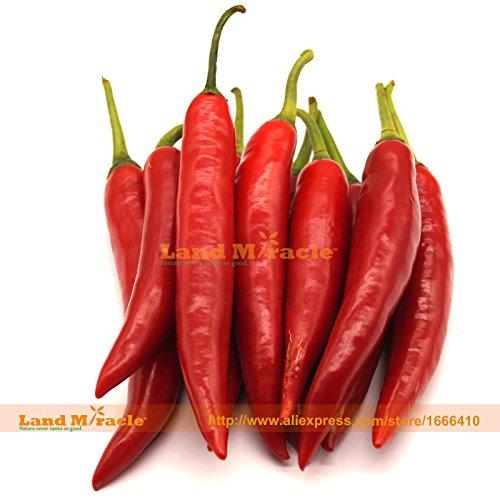 Jalapeno Pepper Red Seeds, 20 graines, Super Hot Chilli légumes biologiques Plantes Bonsai Garden-Land Miracle