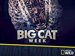NatGeo Wild - Big Cat Week 2017