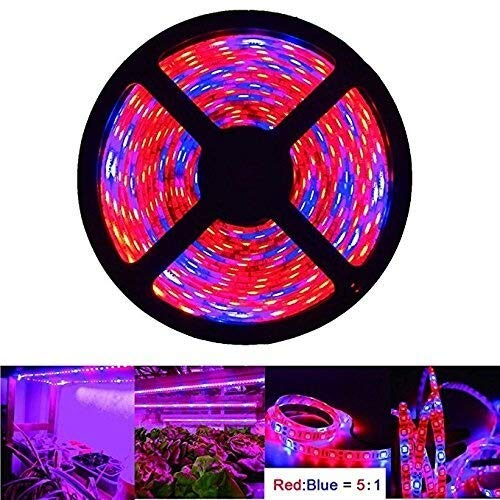 HVTKL Luz de crecimiento de plantas LED, luz Tira de luz LED de 5M / 16.4 pies, espectro completo rojo azul 5: 1 luz de cuerda for acuario invernadero jardín hidropónico lámpara de plantación de veget