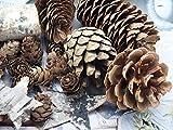 Unbekannt Zapfen Natur Sterne Weihnachten Deko Braun Holz Winter Tischdeko Basteln - 4