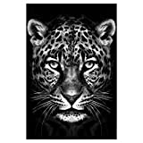 artboxONE Poster 30x20 cm Tiere Schwarz-weiße