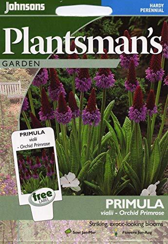 Portal Cool Johnsons Pictorial Pack - Fleurs - Primula vialii - Orchid Primrose - 100 graines