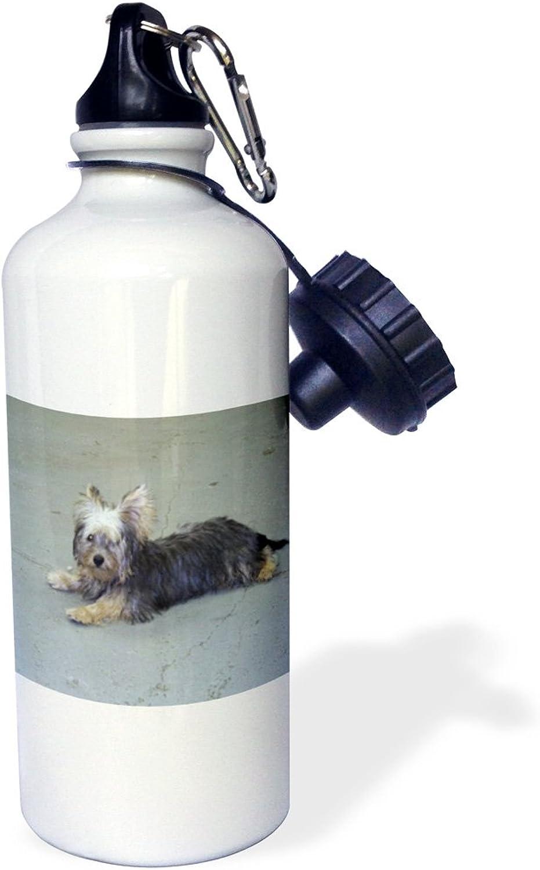 3dpink wb_23805_1  Yorkie  Sports Water Bottle, 21 oz, White