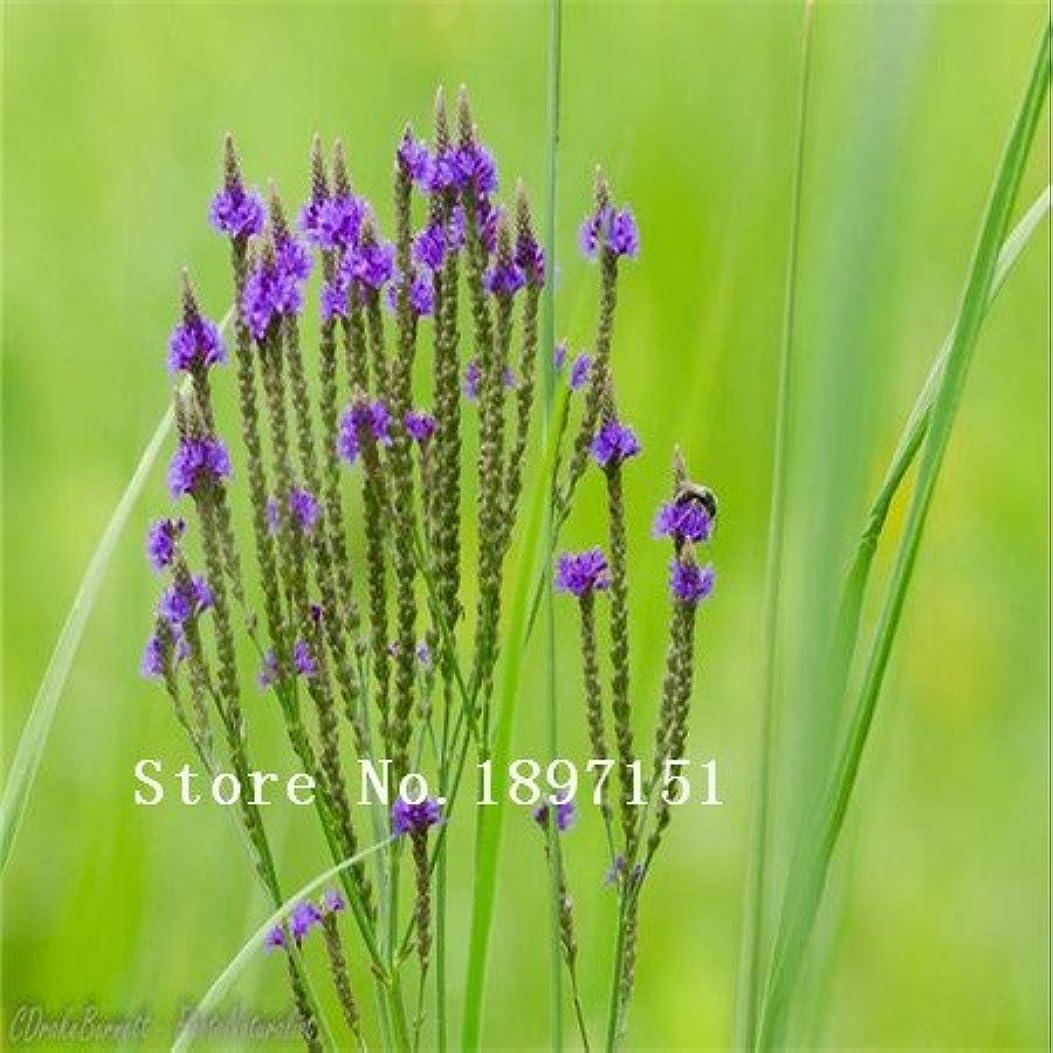 大宇宙むちゃくちゃ新鮮なSwansgreen紫:大セール花種子バーベナ種子バーベナ美容チョークチェリー5色Yemei 100ピース/バッグオリジナル包装ホームガーデンポットpl