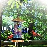 Solar Bird Feeder for Outside - How Do Birds Find Feeders