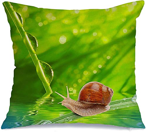 Starojan Pillow Case Morning Ecology Leaf Dew On Spring Grass Animals Wildlife Shallow Textures Springtime Animal Makro Linen Toss Comfortable Throw Cushion Cover for Car Chair Couch Bed 18 x 18 Inch