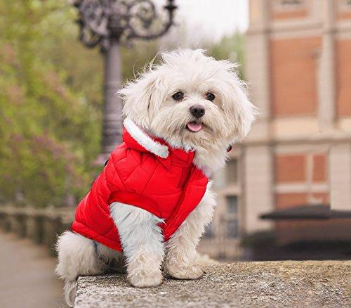 MEDIA WAVE store Giubbotto Piumino 243448 Natalizio con Cappuccio per Cani di Piccola Taglia