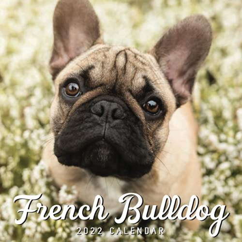 French Bulldog 2022 Calendar: Mini Calendar 2022 with Large Grid for Note - To do list, Gorgeous 8.5x8.5'' Small Calendar, Non-Glossy Paper