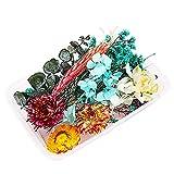 Flores Secas Naturales, Decoración Floral Flores Secas Mezcladas Flores Prensadas Tallos DIY Arreglos para Manualidades, Resina, Velas, álbumes de Recortes, Color al Azar