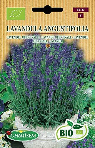 Germisem Biologico Lavandula Angustifolia Semi di Lavanda 0.5 g