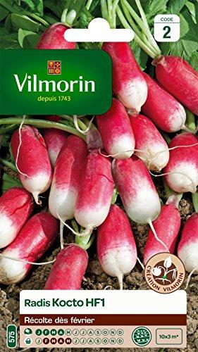 Vilmorin 3888342 Pack de Graines Radis Kocto HF1 Création
