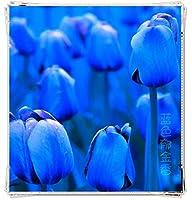 チューリップの球根&色違いの4種類の珍しい花、家族で見られる芳香植物,Blue,35球根