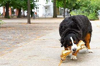 Irish Pure Large Postmans Leg - Gros Os de Cuisse de Bœuf, Os à Ronger Géant pour Chien, sans Grain, Collation à Mastiquer, 100% Naturel, Friandises pour Chien, Snack - env.33cm/1kg