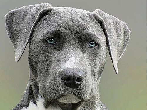 NoNoNo sluit de fotografie van volwassenen zwart-wit-korte mantel hondenschilderen door cijfers DIY uniek
