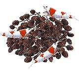 SunGrow Alder Cones for Shrimps, 0.5-1 Inch,...