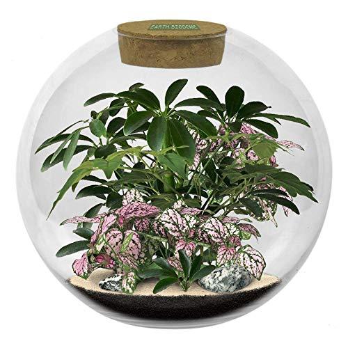 Earth 8-Inch Diameter Glass Biodome | Thick Terrarium Grows Polka Dot Plants,...