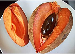 Best mamey sapote tree Reviews