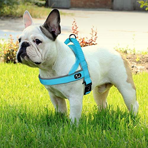 Louvra Hundegeschirr Mesh Brustgeschirr für Hunde Atmungsaktiv Vest Geschirr Reflektierend Einstellbar Weich Geschirr Sicher Kontrolle für Welpen Kleine Mittelgroße Große Hunde - Hellblau S