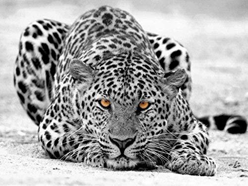 ZZXIAO Papel pintado fotográfico 3D Leopardo gris Snow Leopard Motif para cocina Decoración Fotomural sala Pared Pintado...