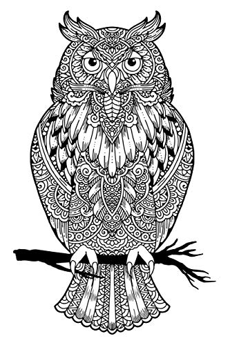 Owl Adult Coloring, Stretched primed canvas to color, Size – 8 x 12 Inches