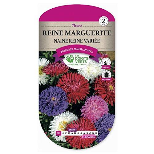 Les doigts verts Semence Reine Marguerite Naine Reine Variée