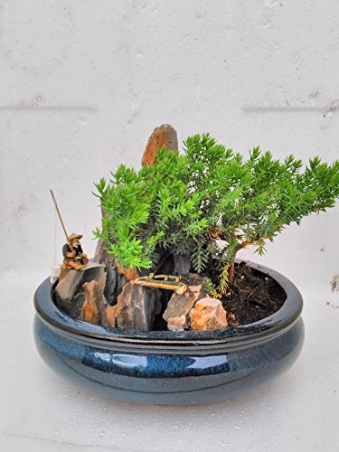 jmbamboo-bonsai- Juniper Tree Zen Garden With Pool Fishman