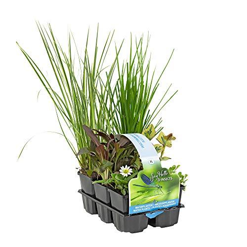 6x Insektenfreundliche Teichpflanzen winterhart | Wasserpflanzen Teich | Garten Teich | Höhe 20-30 cm