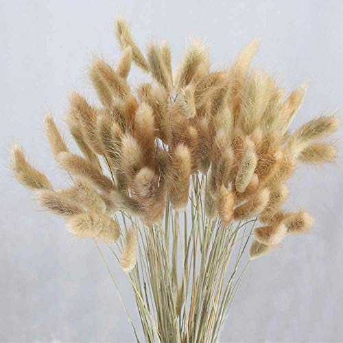 XHXSTORE 60 Pcs Dried Rabbit Tail Grass Dried Grasses Natural Dry Grass Dried Flowers Bouquet Wedding Dry Flower Bunch for Home Garden Party Decor Flower Arrangement