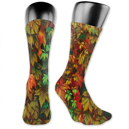 Moruolin Socks Cute Funny For Summer,Vivid Leaves Of Fall Colorful Fresh Nature Leafage Change Of Seasons Theme Image Print,Running Outdoor Recreation,Trainer Socks for Men and Women