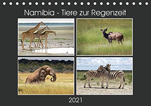 Namibia - Tiere zur Regenzeit 2021 (Tischkalender 2021 DIN A5 quer): Namibias Tierwelt wenn es grünt und wächst in hochauflösenden Bildern. Wildlife pur! (Monatskalender, 14 Seiten )