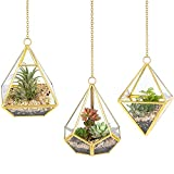 Mkono 3 Pcs Hanging Glass Terrarium Geometric Container Vertical Modern Planter Windowsill Decor DIY Display Box Centerpiece Gift for Succulent Fern Moss Cacti Air Plants Miniature Fairy Garden, Gold