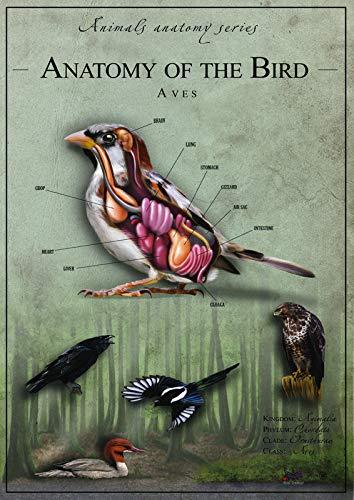 Póster de película de Anatomía de pájaro 2 – Mejor impresión arte de reproducción de calidad de decoración de pared – A3Canvas (16/12