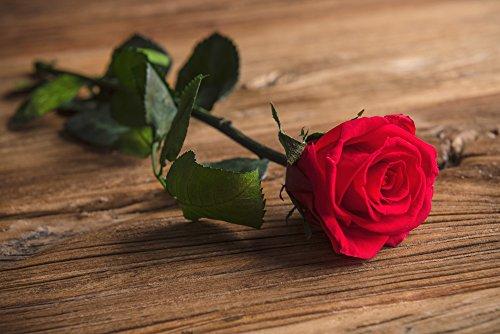 Rosa Eterna Preservada con Tallo Presentada en Estuche de Acetato, Per