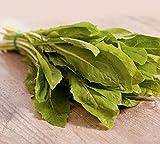 250 x Samen Salat'Schnittzichorie' mehrjährig 100% Natursamen aus Portugal handgepflückt