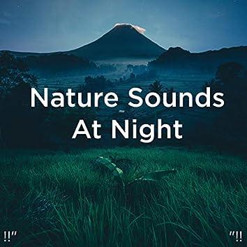 "!!"" Nature Sounds At Night ""!!"