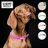 [page_title]-riijk LED Leuchthalsband für Hunde Katzen regenfest (Neue Technologie, kein Schlauch) Halsband USB wiederaufladbar - für mehr Sicherheit