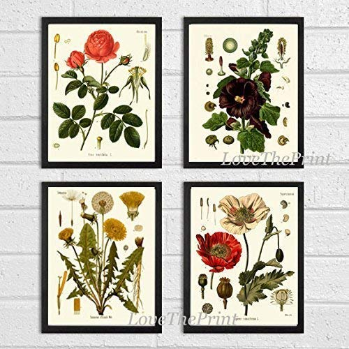Botanical Flower Set of 4 Art Prints Antique Beautiful Red Rose Poppy Large Black